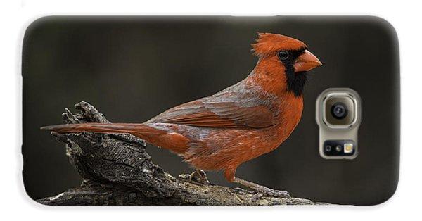 Cardinal 2011-1 Galaxy S6 Case