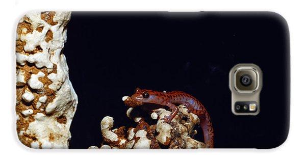 Cave Salamander Galaxy S6 Case