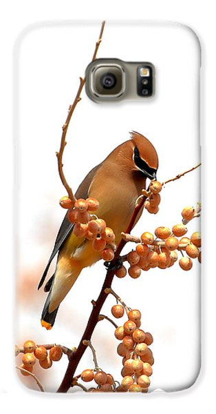 Cedar Wax Wing Galaxy S6 Case by Floyd Tillery