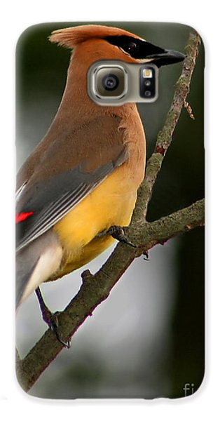 Cedar Wax Wing II Galaxy S6 Case by Roger Becker