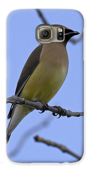 Cedar Waxwing 2 Galaxy S6 Case by Eric Mace