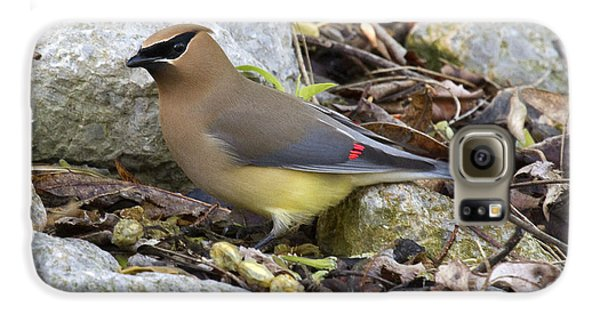 Cedar Waxwing Galaxy S6 Case by Eric Mace
