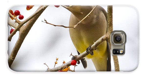 Galaxy S6 Case featuring the photograph Cedar Waxwing by Ricky L Jones