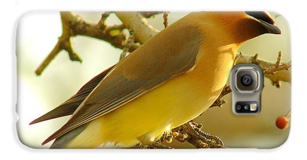 Cedar Waxwing Galaxy S6 Case by Robert Frederick