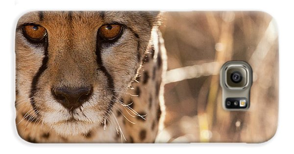 Cheetah Conservation Fund, Namibia Galaxy S6 Case by Janet Muir