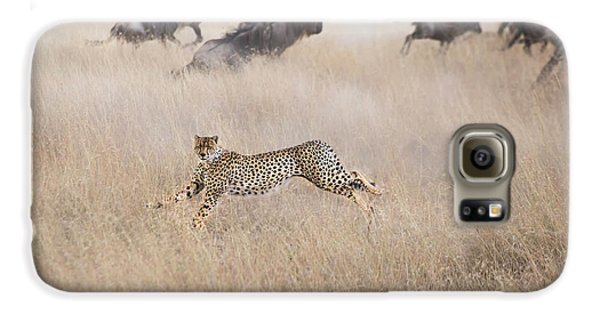 Cheetah Hunting Galaxy S6 Case
