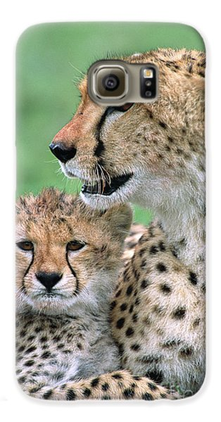 Cheetah Mother And Cub Galaxy S6 Case by Yva Momatiuk John Eastcott