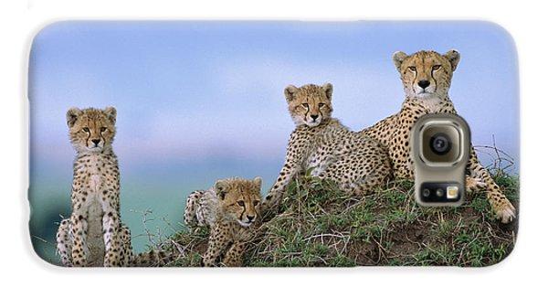 Cheetah Mother And Cubs Masai Mara Galaxy S6 Case