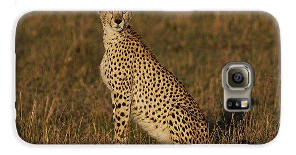 Cheetah On Savanna Masai Mara Kenya Galaxy S6 Case by Hiroya Minakuchi