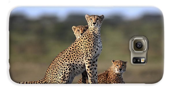 Cheetahs Family Galaxy S6 Case