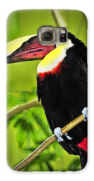 Toucan Galaxy S6 Case - Chestnut Mandibled Toucan by Elena Elisseeva