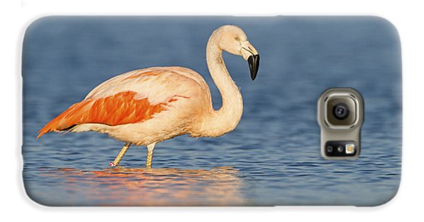 Chilean Flamingo Galaxy S6 Case by Ronald Kamphius