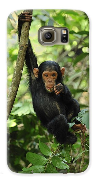 Chimpanzee Baby On Liana Gombe Stream Galaxy S6 Case by Thomas Marent