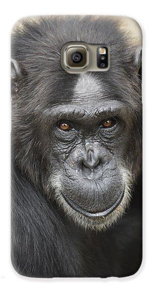 Chimpanzee Portrait Ol Pejeta Galaxy S6 Case by Hiroya Minakuchi