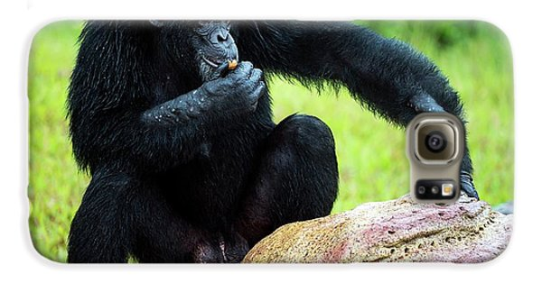 Chimpanzees Galaxy S6 Case by Pan Xunbin