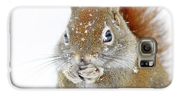 Christmas Squirrel Galaxy S6 Case