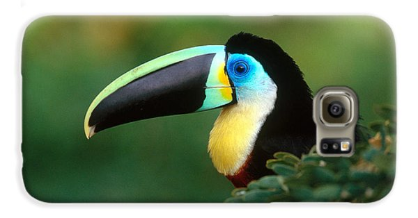 Citron-throated Toucan Galaxy S6 Case by Art Wolfe