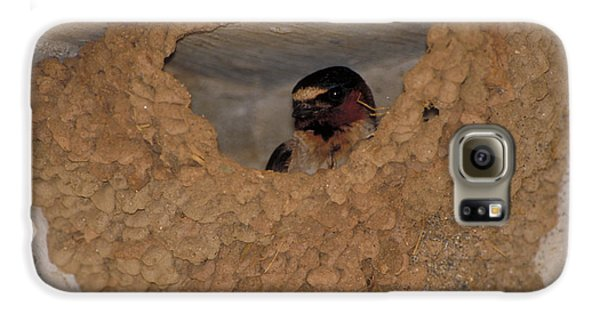 Cliff Swallows Galaxy S6 Case