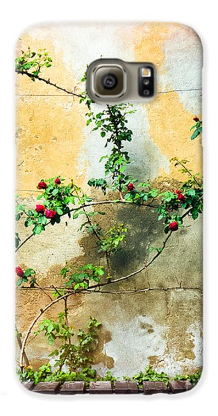 Galaxy S6 Case featuring the photograph Climbing Rose Plant by Silvia Ganora