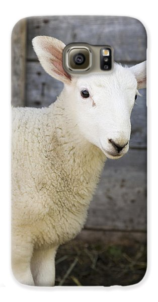 Sheep Galaxy S6 Case - Close Up Of A Baby Lamb by Michael Interisano