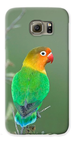 Lovebird Galaxy S6 Case - Close-up Of A Fischers Lovebird by Panoramic Images
