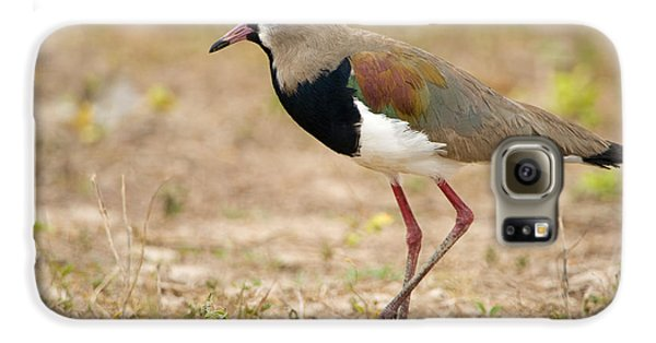 Close-up Of A Southern Lapwing Vanellus Galaxy S6 Case by Panoramic Images