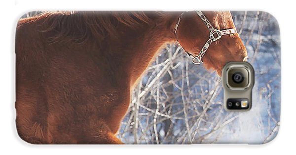 Horse Galaxy S6 Case - Cold by Carrie Ann Grippo-Pike