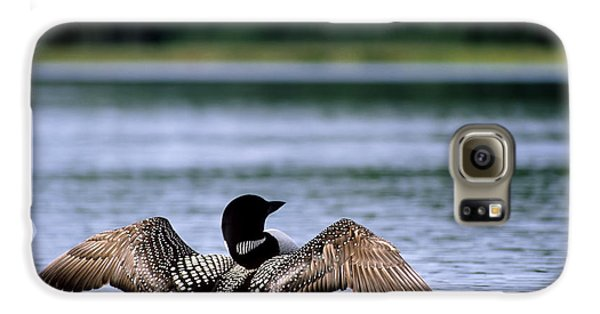 Common Loon Galaxy S6 Case by Mark Newman