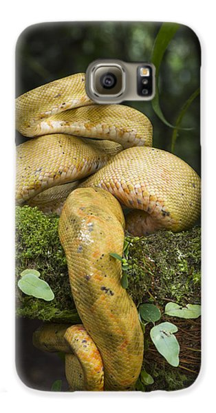 Common Tree Boa -yellow Morph Galaxy S6 Case by Pete Oxford