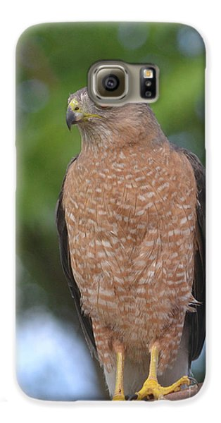 Cooper's Hawk I Galaxy S6 Case