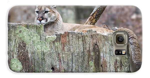 Cougar On A Stump Galaxy S6 Case