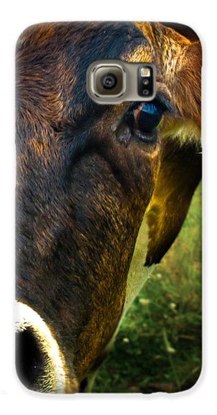 Cow Eating Grass Galaxy S6 Case by Bob Orsillo
