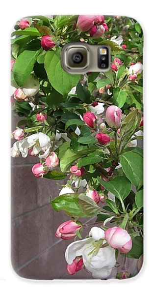 Crabapple Blossoms And Wall Galaxy S6 Case