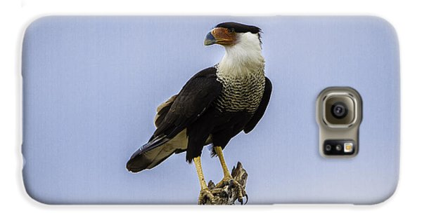 Crested Caracara Galaxy S6 Case
