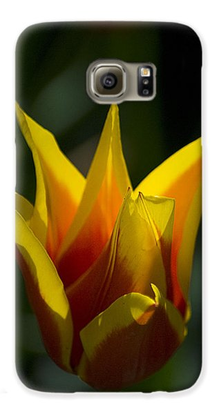 Galaxy S6 Case featuring the photograph Crown Tulip by Yulia Kazansky