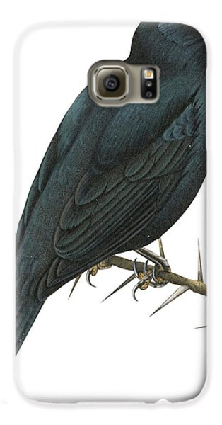 Cuckoo Galaxy S6 Case - Cuckoo Shrike by Anonymous