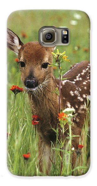 Curious Fawn Galaxy S6 Case