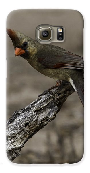 Curious Pyrrhuloxia Galaxy S6 Case