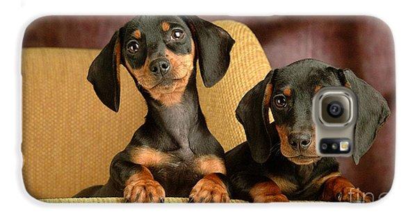 Dachshund Puppies Galaxy S6 Case