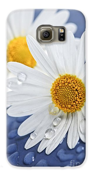 Daisy Flowers With Water Drops Galaxy S6 Case