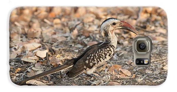 Damara Red-billed Hornbill Foraging Galaxy S6 Case by Tony Camacho