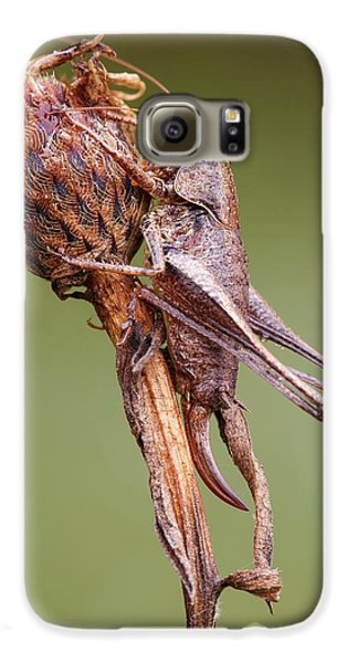 Dark Bush Cricket Galaxy S6 Case by Heath Mcdonald