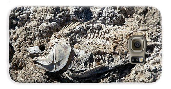 Dead Fish On Salt Flat Galaxy S6 Case