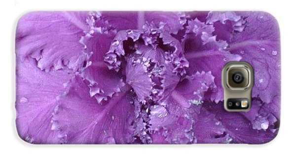#decorative #cabbage #plant After A Galaxy S6 Case