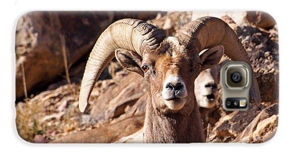 Desert Bighorn Sheep Galaxy S6 Case