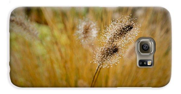 Dew On Ornamental Grass No. 4 Galaxy S6 Case