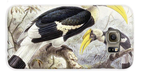 Hornbill Galaxy S6 Case - Dichocerus Bicornis by Johan Gerard Keulemans