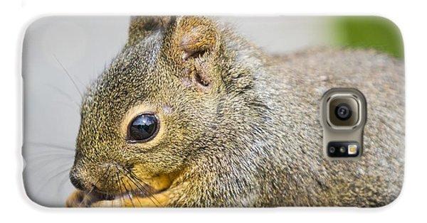 Douglas Squirrel  Galaxy S6 Case