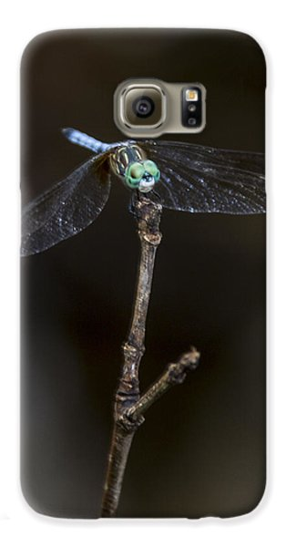 Dragonfly On Branch Galaxy S6 Case