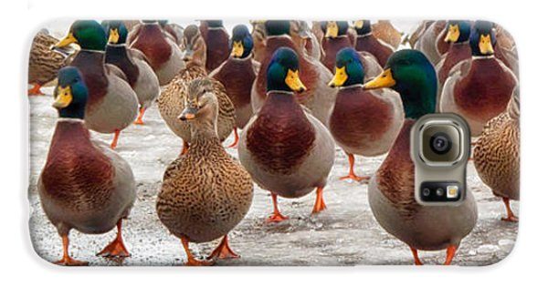 Duck Galaxy S6 Case - Duckorama by Bob Orsillo